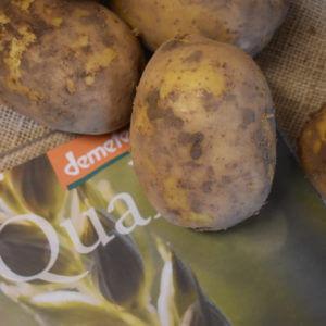 Demeter-Kartoffeln